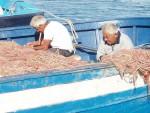 DAL MARE. Suddivisione del mondo ittico