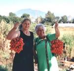 Il pomodorino del Vesuvio