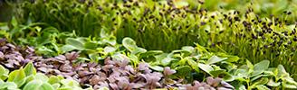 erbe-riconoscere-blocco