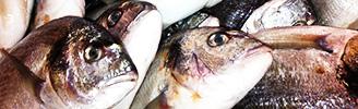 pesci-blk6
